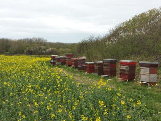 Пчеловодство как бизнес: план действий и этапы организации