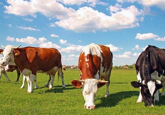 Ведение животноводства